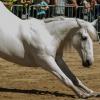 Horses love to yoga around!